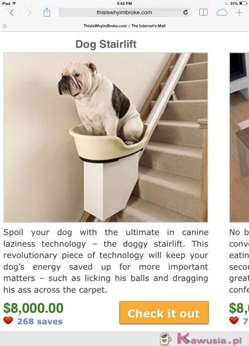 Winda dla psa