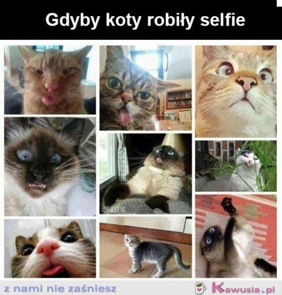 Gdyby koty robiły selfie