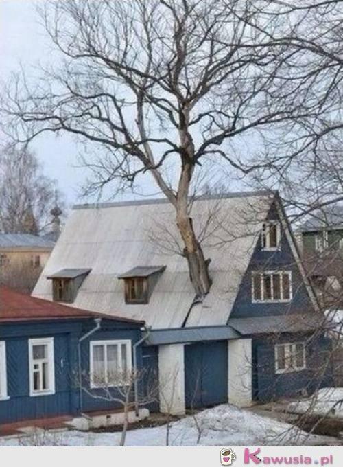 Drzewko w domu