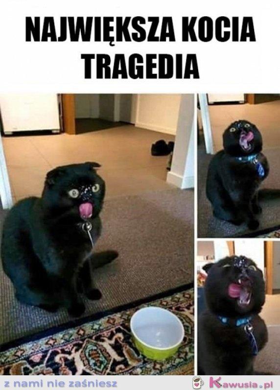 Największa tragedia każdego kotka