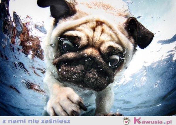Świetne zdjęcie psa