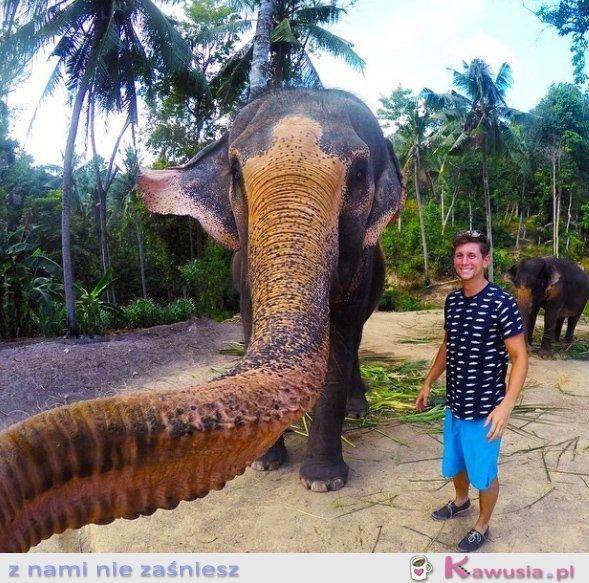 Selfie zrobione przez słonia
