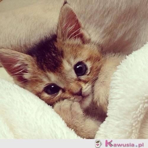 Przesłodki kotek