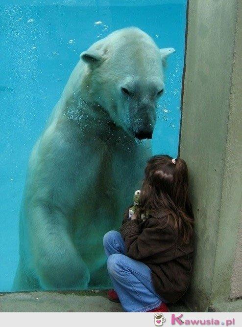 Pan Miś Polarny