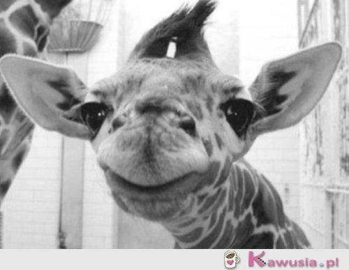 Uśmiech żyrafy