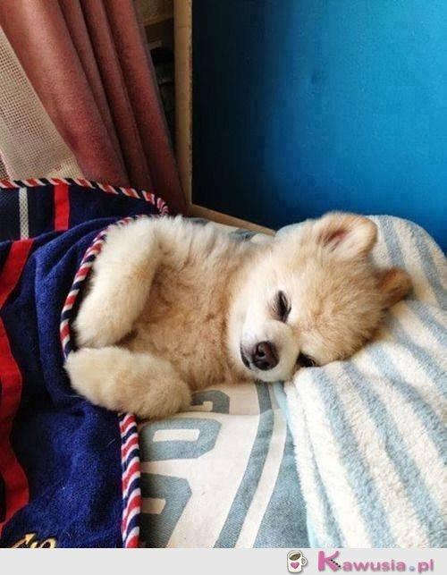Fajnie śpi