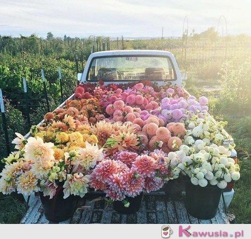 Cudne kwiaty