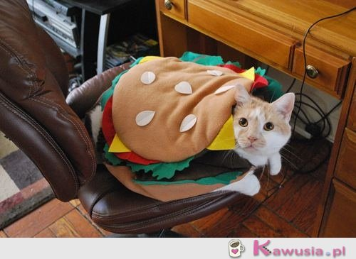 Może hamburgerka?