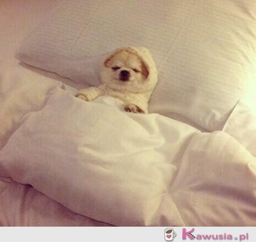 Nie ruszam się dziś z łóżka