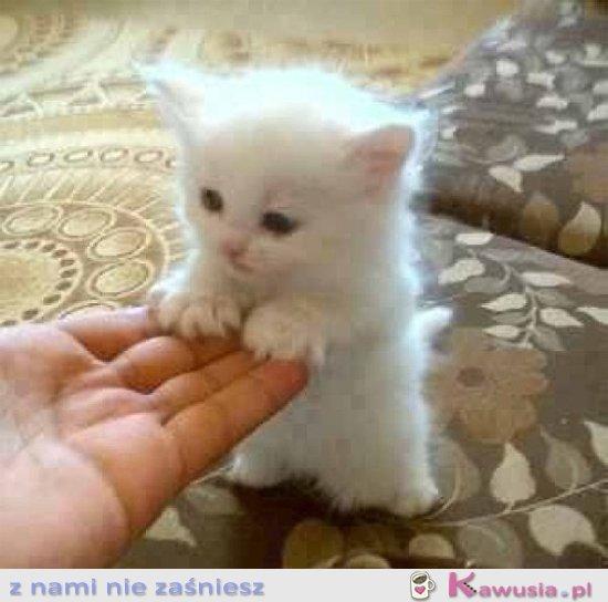 Ale słodki kociak