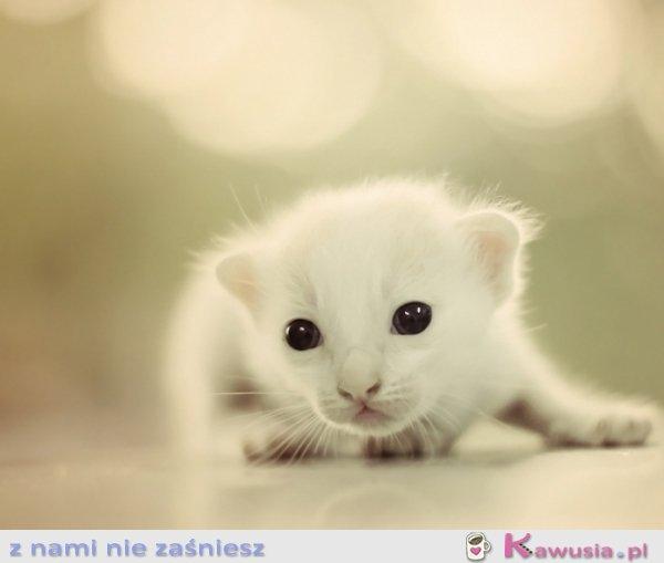 śliczny kociak