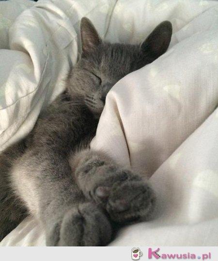 Wstajemy śpiochy!